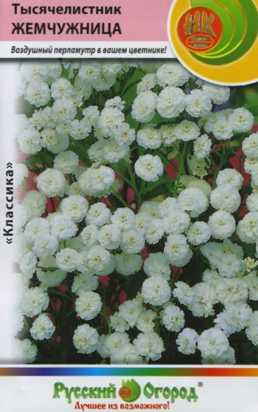 Цветок жемчужница выращивание